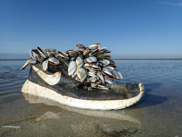 Schoenen, vismateriaal, een boei: massa afval spoelt vanuit Noord-Amerika aan voor onze kust