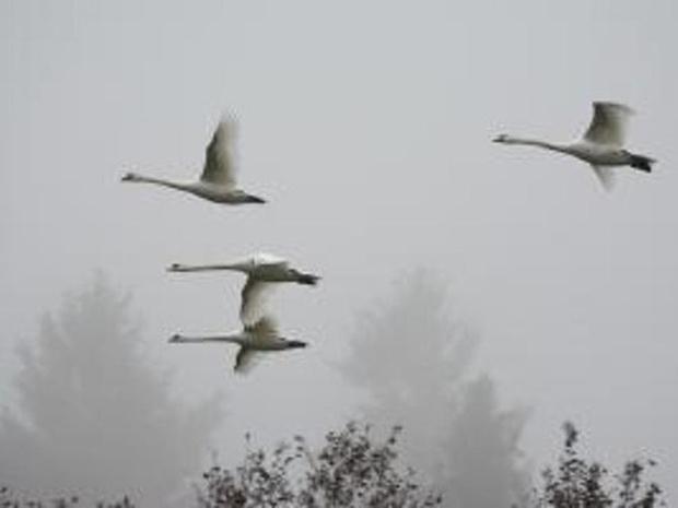 Natuurpunt Avelgem gaat vogels spotten op Geitenberg