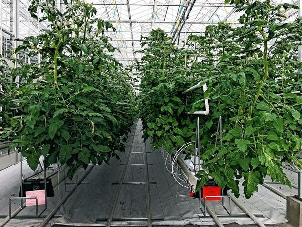 Marc Coucke investit près de 50 millions dans Greenyard