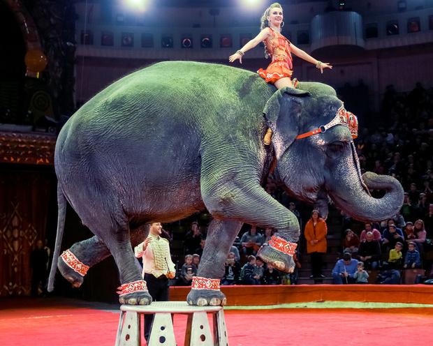 Plus d'animaux sauvages dans les cirques ni de dauphins des parcs aquatiques en France