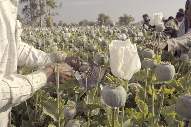 Tv-tip: docu 'The Crime of the Century' houdt de opioïdecrisis tegen het licht