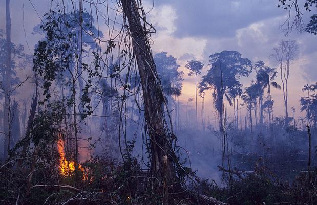 Au-delà des incendies, les multiples périls qui menacent l'Amazonie