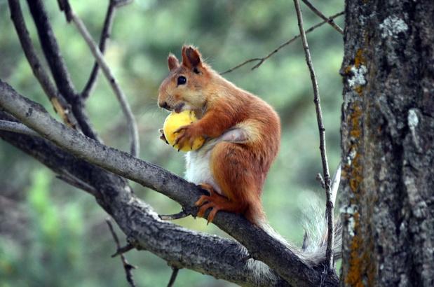 La population animale des forêts a baissé de 53% depuis 1970