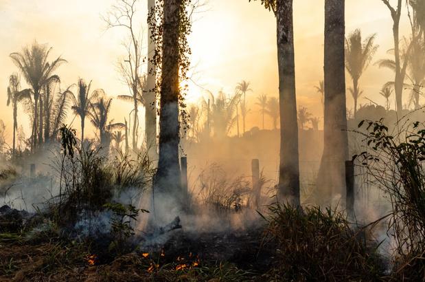 Forêt amazonienne : la déforestation ne s'atténue pas, les feux non plus