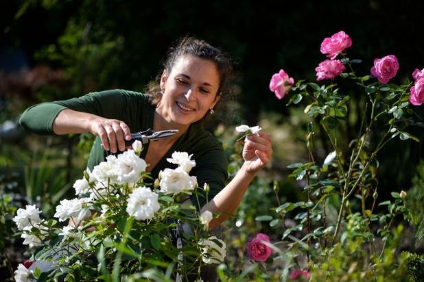 Taux de TVA réduit pour l'achat de plantes chez un entrepreneur de jardins