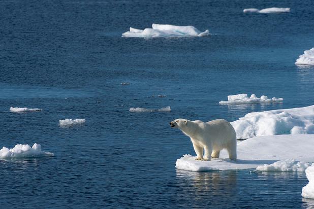 Réchauffement: vers l'extinction des ours polaires d'ici 2100