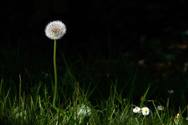 En mai, tonte à l'arrêt: il est temps de compter vos fleurs (vidéo)