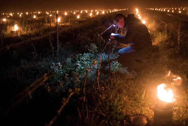 Smeltend poolijs kan Franse wijnoogst in de problemen brengen