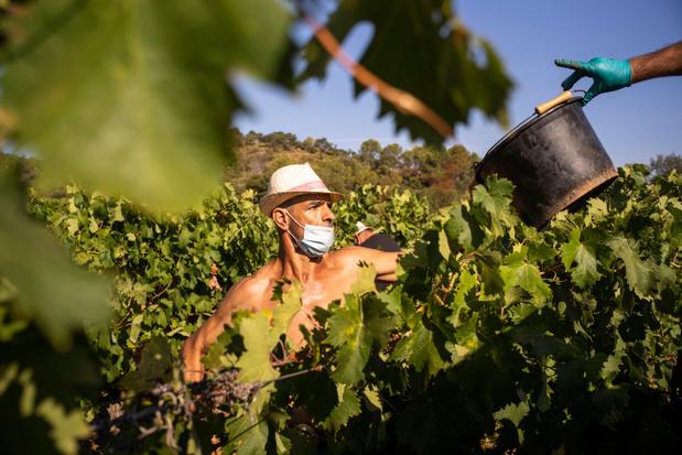 Franse wijnproductie gestegen