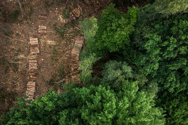 Ontbossing in Europa gaat steeds sneller