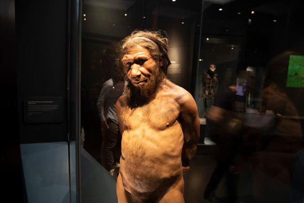 Tentoongestelde neanderthaler in Duits museum krijgt donkerdere huid