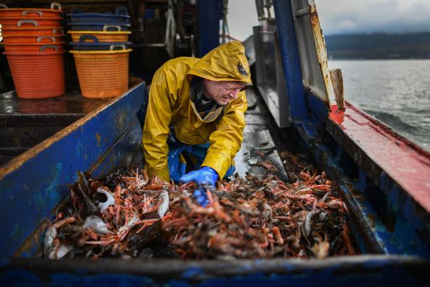 Steeds meer vissersboten vangen steeds minder vis
