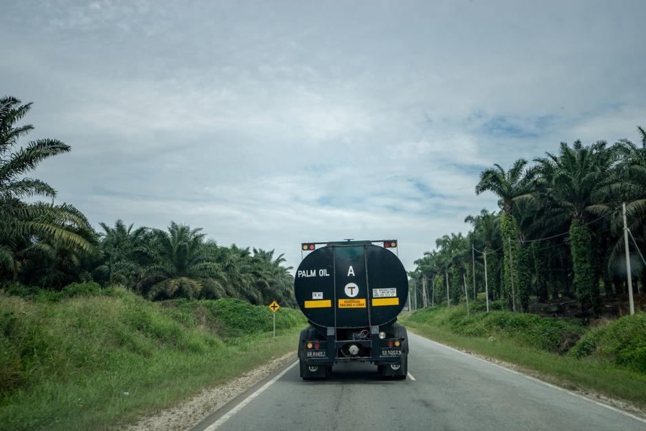 Kan palmolie ooit écht duurzaam zijn?