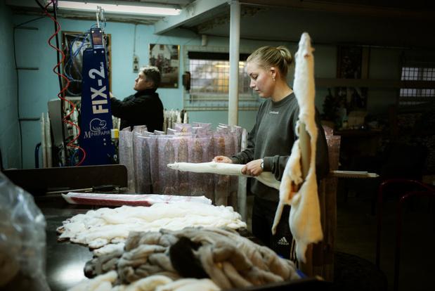 Vlaamse pelsdierkwekerijen sluiten deuren vroeger dan verplicht