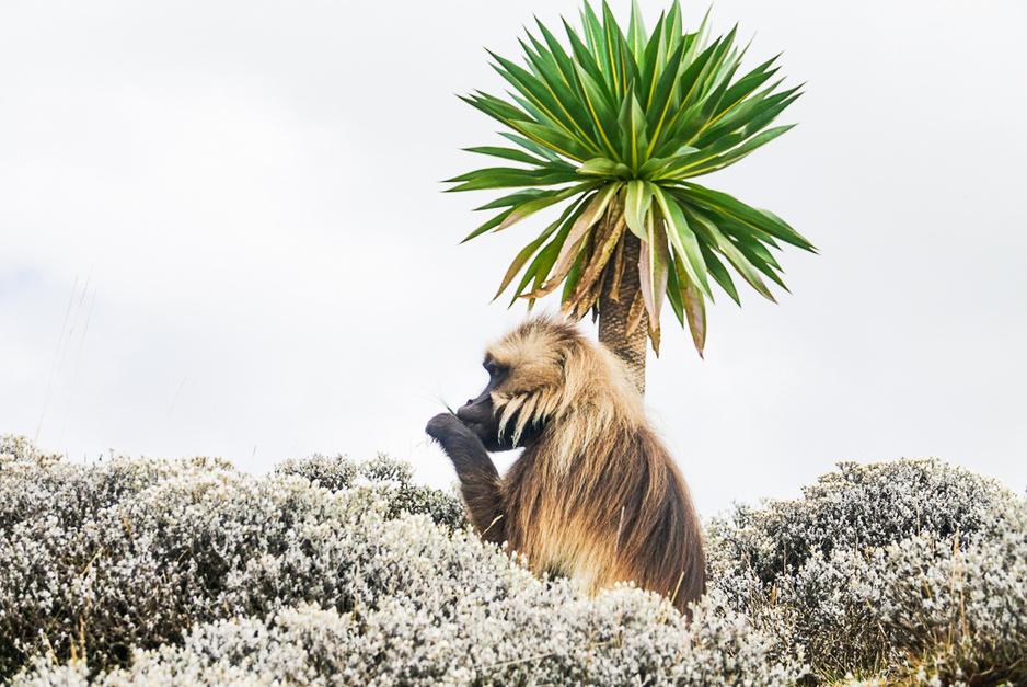 De verbazing voorbij: vijf hoogtepunten in Ethiopië