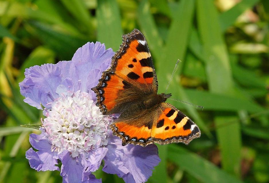 26 sortes de papillons colorent nos jardins (en images)