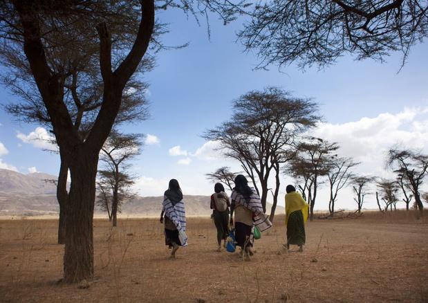 Ethiopiërs breken record en planten 200 miljoen bomen op één dag