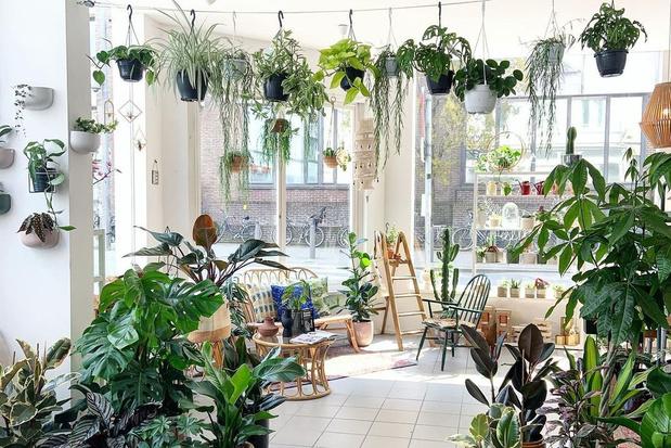 Hoe verzorg je deze vijf populaire kamerplanten? Kenners geven tips