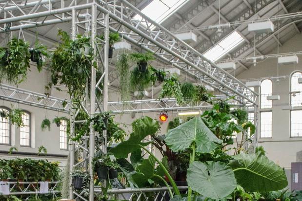 Plantenpop-up tovert Antwerpse Waagnatie om tot urban jungle