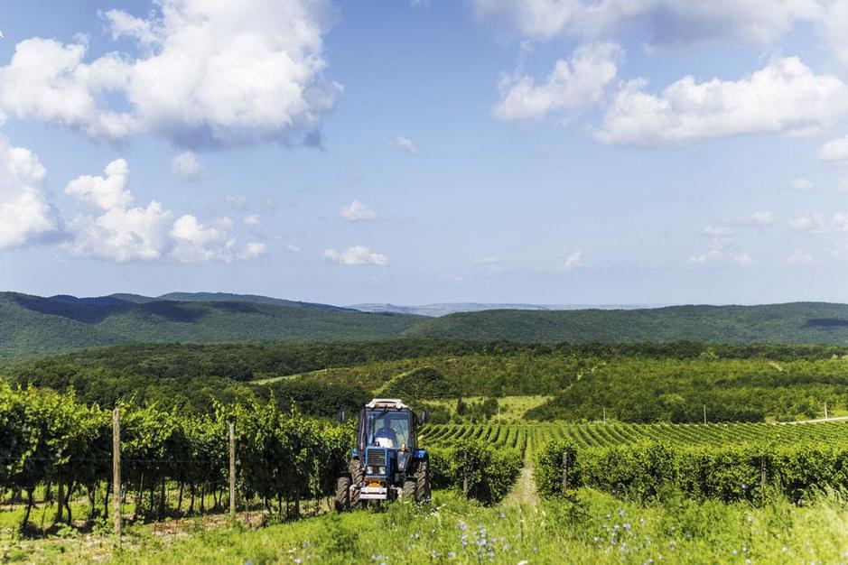 Russische wijn komt naar België: 'Al mijn wijnstokken heb ik eigenhandig geplant'