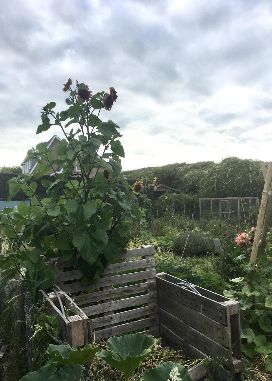 Compost is goud voor de tuin