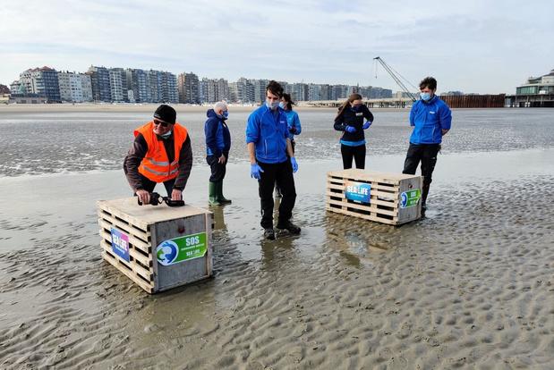 Sea Life Blankenberge laat drie zeehondjes vrij