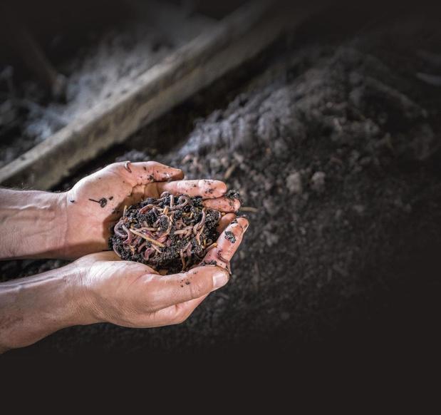 Made in Belgium: des vers pour un jardin d'enfer (en images)