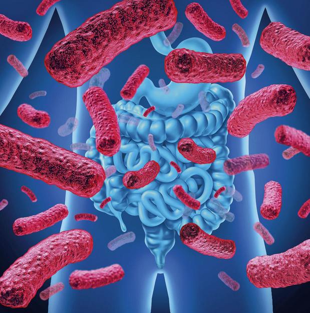 Quand la phytothérapie influence le microbiote