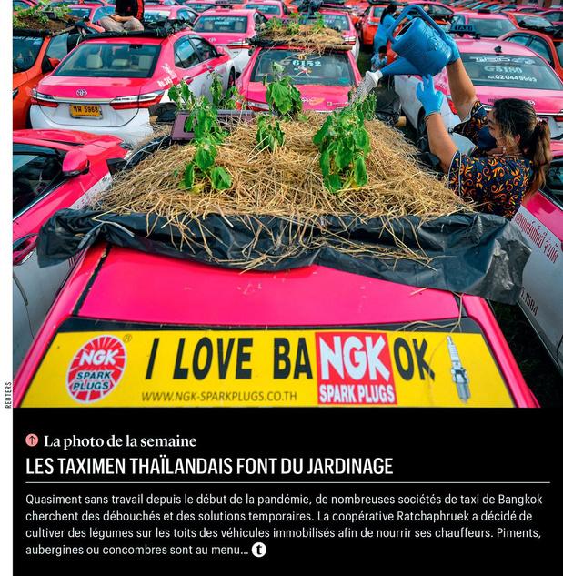 Les taximen thaïlandais font du jardinage