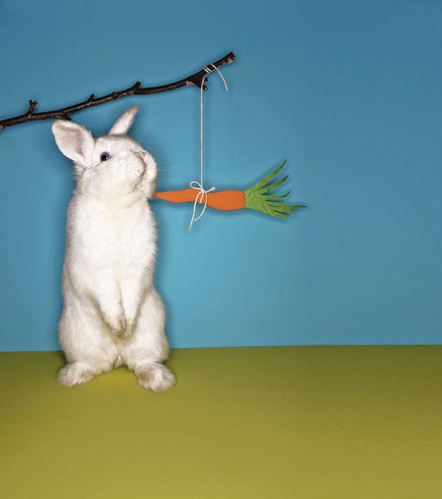 Petit bâton et grosses carottes : comment la Belgique contient la révolte