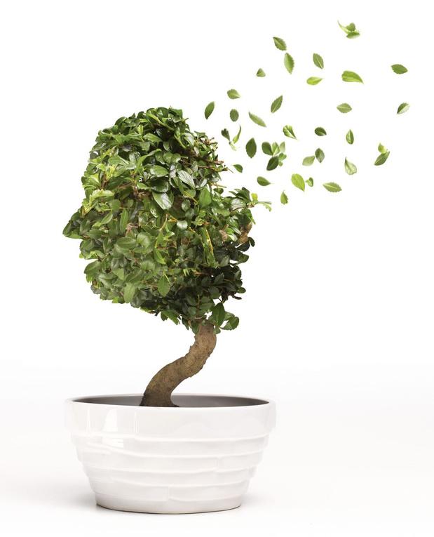 Groene obligaties boomen