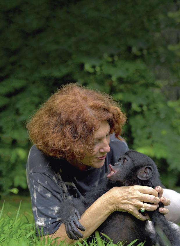 Grands singes: Claudine André, une vie avec les bonobos (Récit)