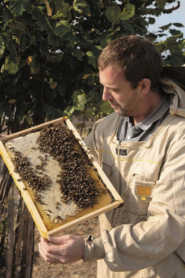 Les secrets de fabrication d'un miel onctueux made in Belgium (+recette)