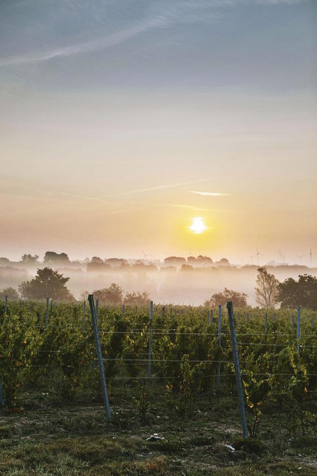 Comment les vignobles wallons financent leur développement