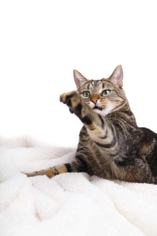 Mon chat m'attaque!