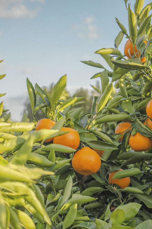 La reine mandarine