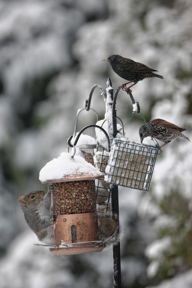 Alles voor de vogels