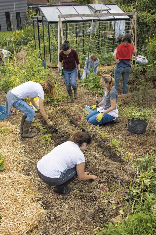 Permaculture: cultiver chez soi, pour demain