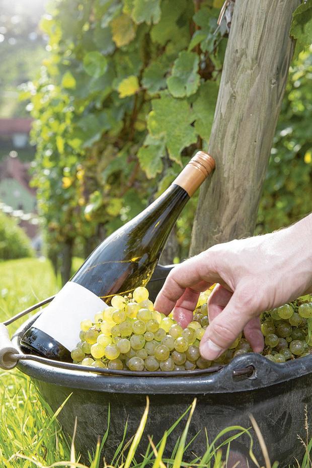Un subside pour promouvoir le vin flamand