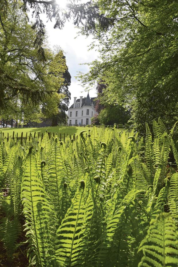 Musée vert au Domaine de Chevetogne: un épineux combat