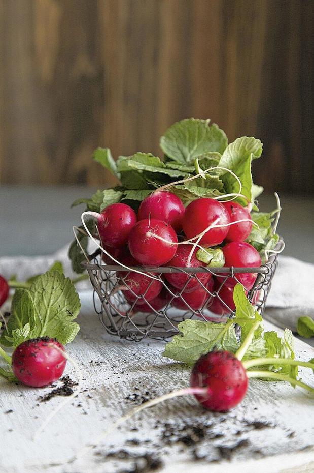 À déguster en ce moment: les radis