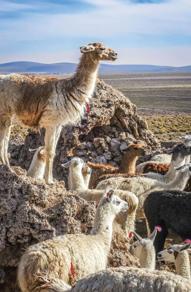 Helpen lama's ons aan een behandeling?