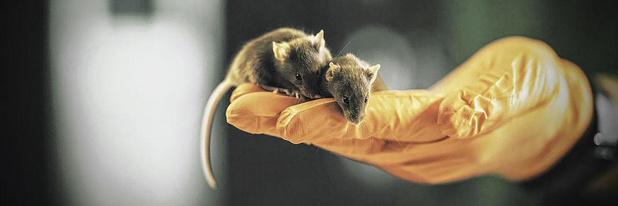 Van muizen en mensen