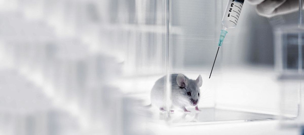 Un projet européen pour limiter le recours aux animaux de laboratoire