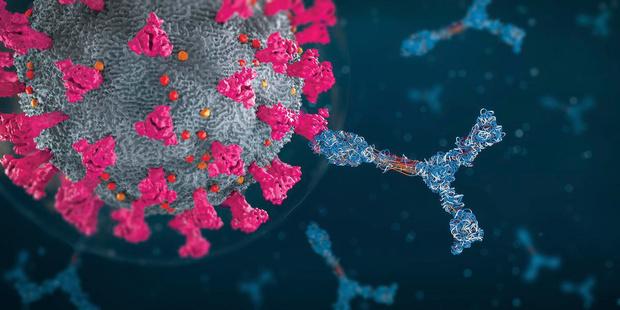 Davantage d'anticorps après une vaccination avec Moderna qu'avec Pfizer, selon une étude belge
