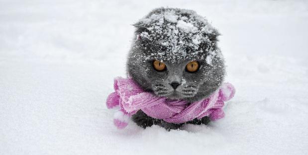 Les pathologies hivernales du chat