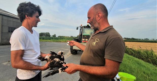 Boer Olivier beschermt nest kiekendieven op zijn akkers