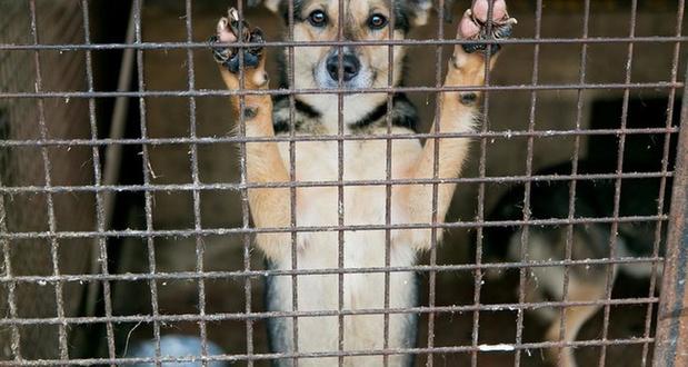 Man krijgt vijf maanden cel voor diefstal van eigen hond in dierenasiel