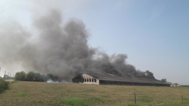 Hevige brand vernielt kippenstal