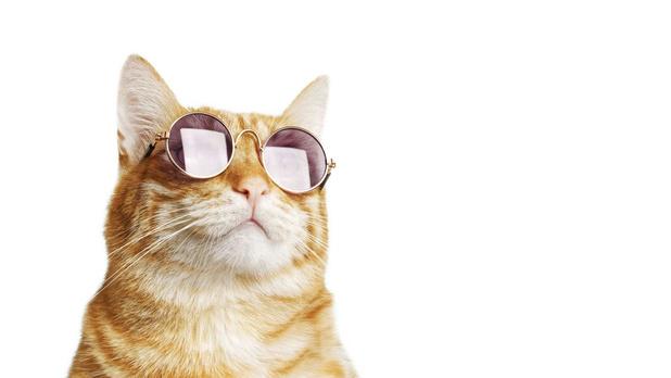 Ouvrez les yeux sur les achats de lunettes en ligne